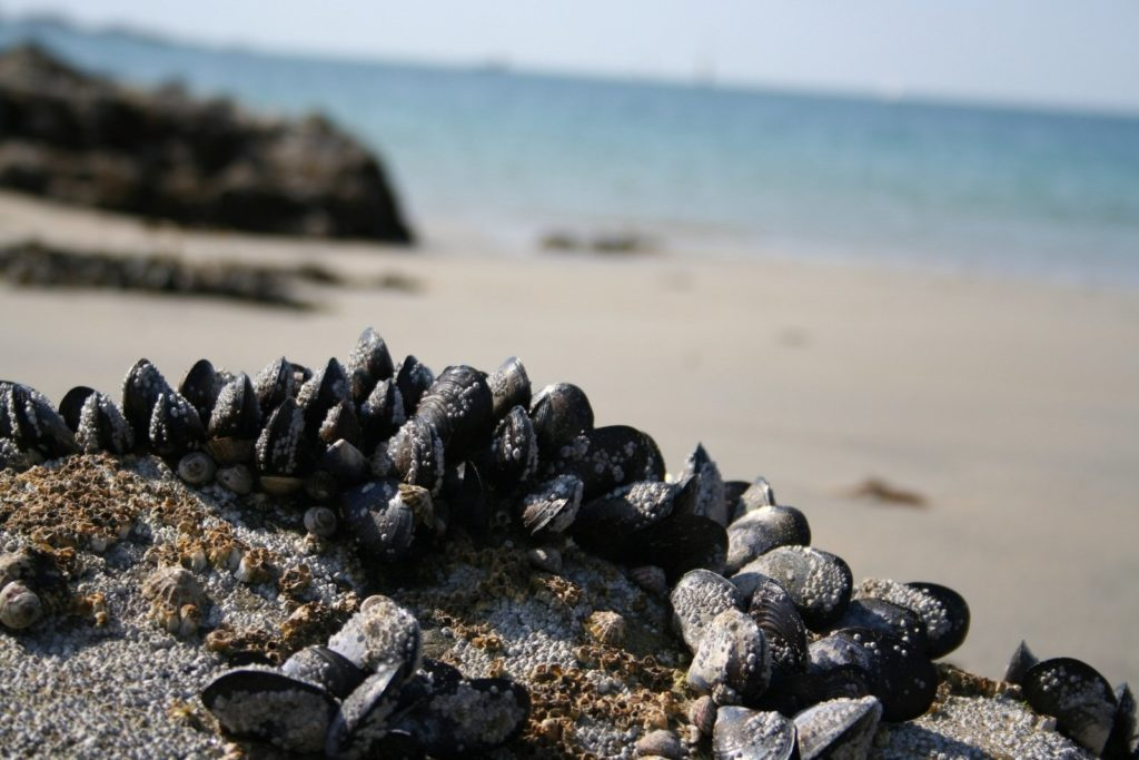 Nature Quimper Cornouaille Finistère Bretagne